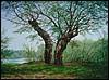 Ártéri fák