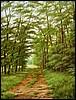 Erdőben 50/40 cm